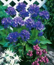 Milyen növényekkel ültessük be kertünket?