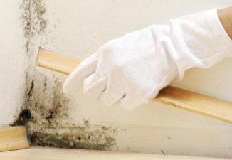 A falak veszélyei és kezelésük