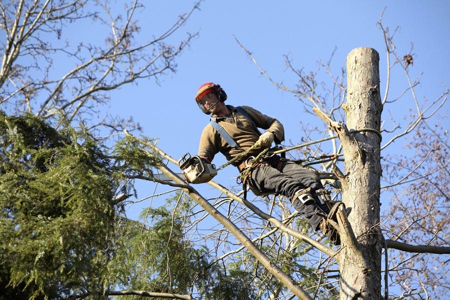 Biztosítsa a lakók és a nyaralók épségét a veszélyes fák kivágásával!