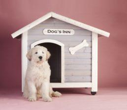 Ajándékozza meg kutyáját luxus kutyaházzal!
